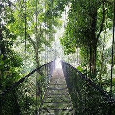 Costa Rica: Arenal Hanging bridges.  Beautiful views.  I took this picture right before walking through it.