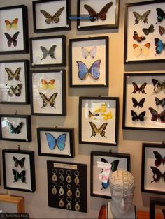 Butterfly love - place a collection of what you love on the walls, shells look really nice too, just get the wider frames with raised glass.