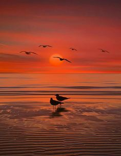 Devi avere la forza di un leone e la quiete di un tramonto per affrontare la vita di tutti i giorni. L. Del Grande