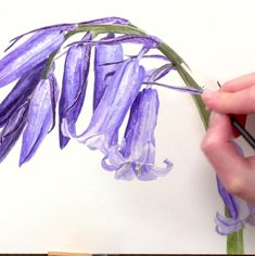 How to paint an iridescent bluebell in watercolour - Anna Mason Art Watercolor Painting Techniques, Watercolour Tutorials, Watercolor Paintings, Botanical Drawings, Botanical Art, Anna Mason, Watercolor Flowers, Painting Flowers, Blue Bell Flowers