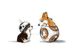 BB8 and Corgis