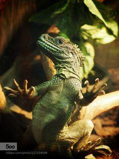 Little dragon:) by AlexanderPolomodov. Please Like http://fb.me/go4photos and Follow @go4fotos Thank You. :-)