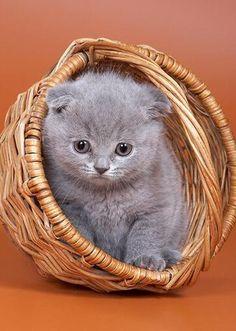 cute-kitten-04.jpg More at - Catsincare.com