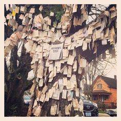 I haven't seen it yet but apparently this is a huge wishing tree in north portland. Holy smokes, I love this so much. Thank you Melanie @whimsykitten for sending this to me. Totally going to take True. #wishingtree #nopo #pdx