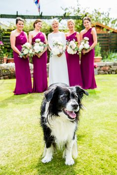 Wedding Dog! By Alan Snelling Photography