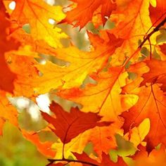 8 Best Fall Paint Colors - How To Decorate with Fall Colors Fall Paint Colors, Autumn Colours, Vibrant Colors, Warm Colors, Autumn Painting, Images Google, Bing Images, Coral, Autumn Inspiration