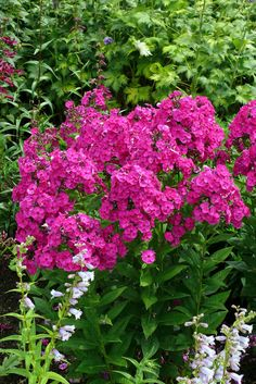 Beautiful Flowers, Flora, Projects To Try, Plants, Chata, Gardening, Balcony, Lawn And Garden, Plant