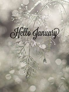 Hello January Images, Pictures, Quotes, and Pics January Wallpaper, Calendar Wallpaper, Winter Wallpaper, Christmas Wallpaper, Hd Wallpaper, Hallo November, Welcome November, November Month, Hello Mai