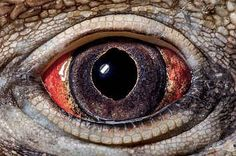 These Extraordinary Close-Up Photos Of Animal Eyes Look Out Of This World