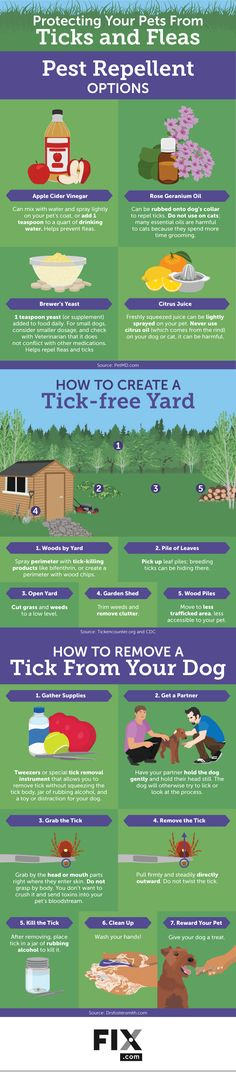 Protect Your Pet From Ticks and Fleas by Practicing Constant Vigilance!