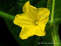 224 best vegetable plants images on pinterest plant identification indian vegetable names be sure to visit gardenanswers and download the free plant mightylinksfo