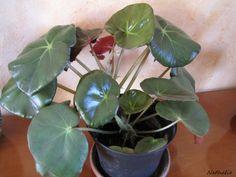 ............... Décembre 2011 .............. Décembre 2012 ............ ses fleurs Bonne semaine à vous ....