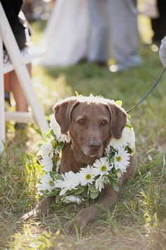 pets in #weddings :)