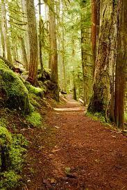 I want to do this trail run.   McKenzie River Trail, Oregon