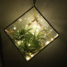 Add some holiday spirit with these magical firefly lights. Perfect for terrariums and safe for plants of all kinds. Lights stay safe to touch for 14+ hours!  Your order comes with:   • ONE 7.2 ft strand of firefly lights  • TWO CR2032 Lithium Cell Batteries (Batteries are