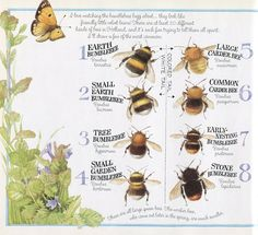 Gallery.ru / Фото #30 - Жучки - паучки, пчелки - бабочки... - pechka2
