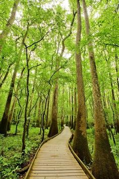 nice! A boardwalk through the forest #Congaree #National #Park