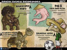Especies extintas recientemente - Ubaldo - mediotiempo.com