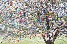 Chris and Paige: The One with the Osterbaum / Easter Tree