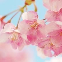 【yumyyy.9】さんのInstagramをピンしています。 《去年の4月♥✨今年の4月はまた変わってると良いな♥♥#桜#春#冬#寒い#雪#いいね#ピンク#天気いい#しあわせ #ゆっくり #のんびり#カフェ#東京#大阪#名古屋#福岡#広島#フォロー#フォローミー #相互フォロー #いいね返し #奇跡#家族#満開#たのしい#love#日本》
