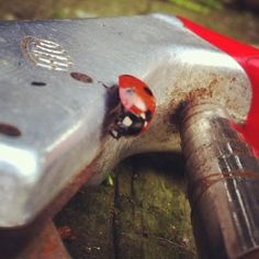 FELCO & ladybird
