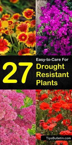 California, Texas, and Colorado are known for droughts, while Florida is known for its hot and humid conditions. Using easy to care for drought resistant plants for xeriscaping allows you to turn your front yards into a beautiful desert landscape. Drought Resistant Landscaping, Drought Resistant Plants, Drought Tolerant Landscape, Colorado Landscaping, Florida Landscaping, Landscaping Ideas, Backyard Landscaping, Backyard Ideas, Garden Ideas