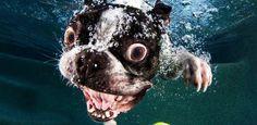 Hund under vann