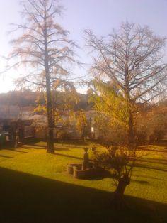 Jardin Botánico Pazo Fonseca después del otoño! #Ginkgobiloba