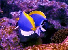 Sea Life 18