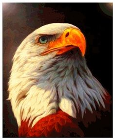 Megayouput diamond Painting cross stitch eagle pictures diamond mosaic Needlework diamond embroidery home decor canvas Eagle Images, Eagle Pictures, Beautiful Birds, Animals Beautiful, The Eagles, Bald Eagles, Eagle Painting, Diy Painting, Painting Canvas