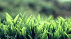 Beautiful Green Grass wallpaper