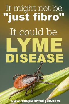 """Last month, I was diagnosed with chronic Lyme disease. My doctor says my fibromyalgia symptoms may actually be caused by Lyme. I wanted to share my story because I'm sure there are many others in the fibro community who have undiagnosed Lyme. Sometimes it's not """"just fibro."""""""
