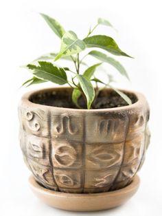 Fíkus: pěstování od A do Z Terrarium, Planter Pots, Flora, Lovers, Gardening, Terrariums, Garten, Plants, Lawn And Garden