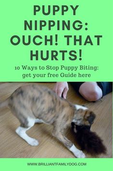 New puppy, puppy training, puppy biting | Stop puppy nipping quickly and kindly - get your FREE GUIDE | www.brilliantfamilydog.com