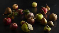 Taste by Four Seasons - Serving up the best in global food & wine