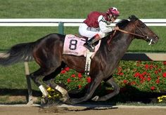 Preakness Stakes victor- Bernardini (2003 A.P. Indy - Cara Rafaela). Bred to both Kentucky Oaks and Preakness Stakes winner, Rachel Alexandra with a 2013 filly and Zenyatta- Breeders Cup and Breeders Cup Ladies' Classic winner with a 2012 colt, Cozmic One. Sire of Zenyatta's half-sister, Eblouissante.