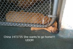 China A1472735 Terrier Mix Urgent Dogs of Miami
