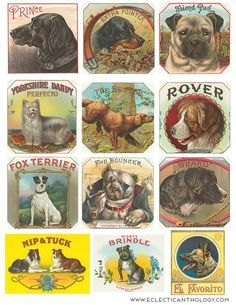 FREE Vintage Dog Cigar Labels Collage Sheet-⊱✿-✿⊰ Join 4,200 others & follow the Free Digital Scrapbook board for daily freebies. Visit GrannyEnchanted.Com for thousands of digital scrapbook freebies. ⊱✿-✿⊰