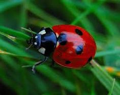 images of brightly colored insects - Google Search