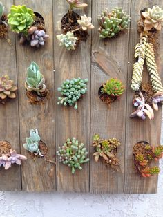 Vertical garden of succulents after several months - growing well