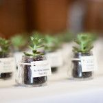 """""""DIY Succulent Favors Easy, eco-friendly favors your guests will LOVE! These DIY succulent favors make beautiful gifts for guests, double as a place card, and are easy to make! Succulent Wedding Favors, Wedding Favours, Party Favors, Diy Party, Party Gifts, Party Ideas, Diy Ideas, Food Ideas, Terrarium Wedding"""