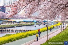 Đặt vé siêu rẻ tại http://www.vietnambooking.com/tin-tuc/San-ve-may-bay-tu-Viet-Nam-sang-Busan-gia-re-mua-he.html  Nếu như Seoul là một thành phố thủ đô hoa lệ, hiện đại với rất nhiều những công trình kiến trúc độc đáo, những khu trung tâm thương mại sầm uất,…thì thành phố cảng Busan lại hấp dẫn khách du lịch bởi những bãi biển xanh trong tuyệt đẹp, phong cảnh lãng mạn cùng với những người dân địa phương thật thà, mến khách. Và chỉ cần sở hữu trong tay tấm vé máy bay từ Việt Nam sang Busan…