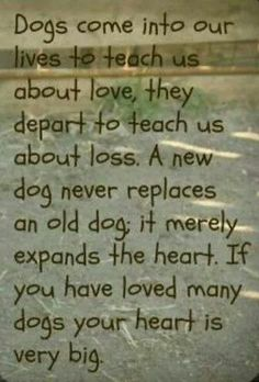 Dog Love. God knew what he was doing when he made the DOG. Backwards is GOD..
