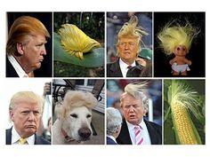 Risultati immagini per trump hair meme Donald Trump Hair, Hair Meme, Make Smile, Digital Trends, Funny Photos, Hilarious, Things To Come, Animation, Memes
