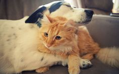 29 Cats and Dogs Give Us A Lesson In Humanity See more at http://www.radass.com/cars-dogs-hugging/