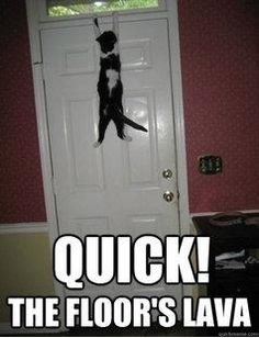 If I saw a cat doing that I would think ether its doing pull ups or its looking for something.