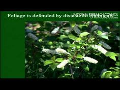 ▶ Urban Forestry 13: The Role of Urban Forests in Biodiversity Restoration - YouTube