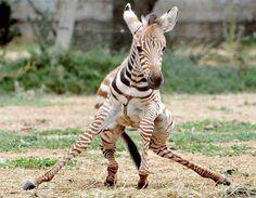 Aprendendo a andar (© Jay Town/Rex Features)