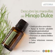 Hinojo Dulce DoTerra                                                                                                                                                                                 Más Melaleuca, Doterra Essential Oils, Essential Oil Blends, Natural Healing, Natural Oils, Fennel Oil, My Doterra, Esential Oils, Pure Oils