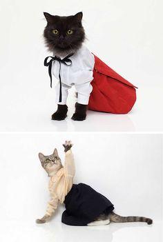 dicas pet shop: Seleção de Roupas para Gatos